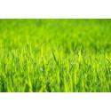 Ornamental y áreas verdes