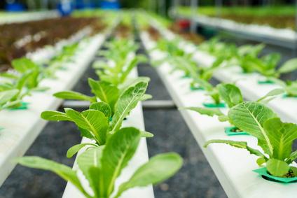 Abonos y fitosanitarios