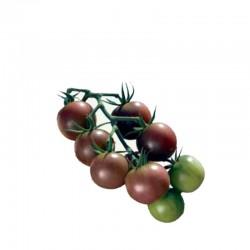 TOMATE CÓCTEL BLACK CHERRY (8x12 plantas)