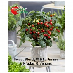 TOMATE SWEET STURDY F1 JIMMY (8x1 plantas)