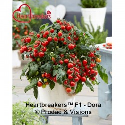 TOMATE HEARTBREAKERS™ F1 - DORA (8x1 plantas)