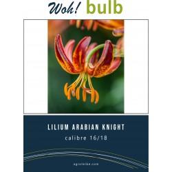Woh! Bulb -lilium ARABIAN KNIGHT