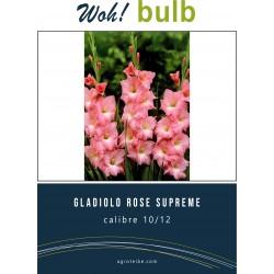 Woh! Bulb -gladiolo ROSE SUPREME