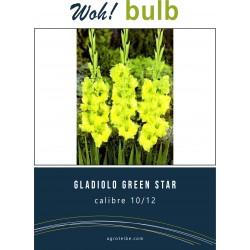 Woh! Bulb -gladiolo green star