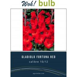 Woh! Bulb -gladiolo FORTUNA RED