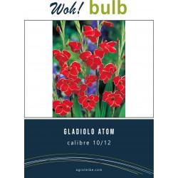 Woh! Bulb -gladiolo atom