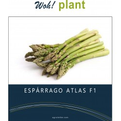 woh! plant - Espárrago