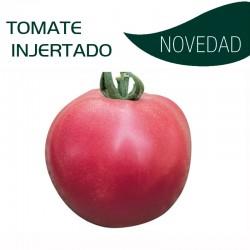 TOMATE INJERTADO FUJI PINKE F1 (8x6 plantas)