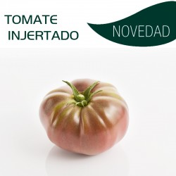 TOMATE INJERTADO MARNERO F1(8x6 plantas)